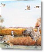 Sandhill Cranes-jp3159 Metal Print