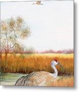 Sandhill Cranes-jp3160 Metal Print