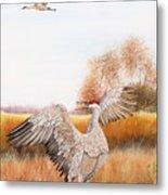 Sandhill Cranes-jp3161 Metal Print