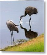 Sandhill Cranes Reflection On Pond Metal Print