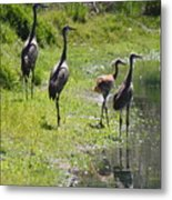 Sandhill Family By The Pond Metal Print