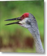Sandhill Song Metal Print