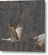 Sandhills In Flight Metal Print