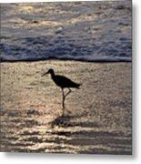 Sandpiper On A Golden Beach Metal Print