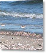 Sandpipers At The Seashore Metal Print