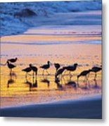 Sandpipers In A Golden Pool Of Light Metal Print