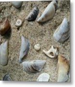 Sandy Seashells Metal Print