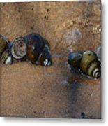 Sandy Shells Metal Print