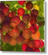 Sangiovese Grapes Metal Print