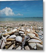 Sanibel Island Sea Shell Fort Myers Florida Broken Shells Metal Print
