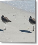 Sanibel's Gulls Metal Print
