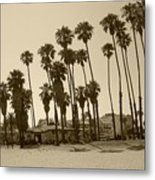 Santa Barbara Palms Metal Print