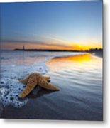 Santa Cruz Starfish Metal Print
