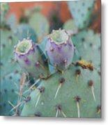 Santa Fe Prickly Pear Cactus Metal Print