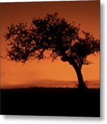 Santa Ynez Oak Tree Metal Print