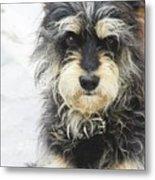 Santorini Dog Metal Print