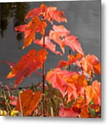 Sapling By The Pond Metal Print