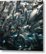 Sardines 2 Metal Print