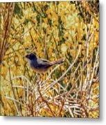 Sardinian Warbler Metal Print