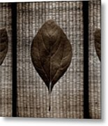 Sassafras Leaves With Wicker Metal Print