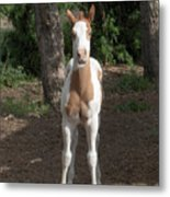 Sassy Filly Metal Print