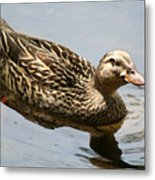 Saturday At The Pond Metal Print