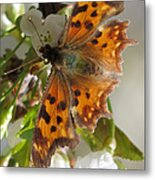 Satyr Comma Metal Print
