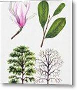 Saucer Magnolia Metal Print