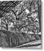 Savannah Perspective - Black And White Metal Print