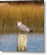 Savannah Shore Bird Metal Print