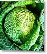 Savoy Cabbage Metal Print