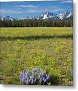 Sawtooths And Wildflowers Metal Print