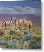 Say Cheese Antelope Metal Print