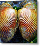Scallop - Close Up Metal Print