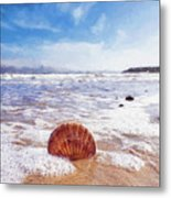 Scallop Shell On The Beach - Impressions Metal Print