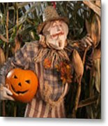 Scarecrow With A Carved Pumpkin  In A Corn Field Metal Print