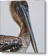 Scared Pelican Metal Print