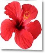 Scarlet Hibiscus Tropical Flower  Metal Print
