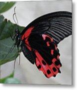 Scarlet Mormon Butterfly #2 Metal Print