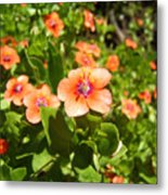 Scarlet Pimpernel Flower Photograph Metal Print