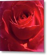 Scarlet Rose Flower Metal Print