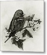 Scarlet Tanager - Black And White Metal Print