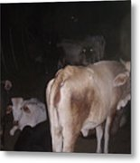 Scary Cows Metal Print
