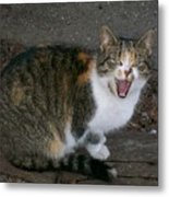 Scary Kitty Metal Print