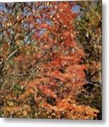 Scenic Autumn  Metal Print