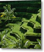 Scenic Valleys With Rice Fields In Bali Metal Print