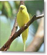 Scenic View Of An Adorable Yellow Parakeet Metal Print