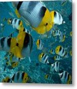 School Of Butterflyfish Metal Print