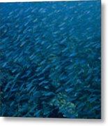 School Of Fish On Mas Bango Reef In Aruba Metal Print