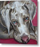 Scooby Weimaraner Pet Portrait Metal Print